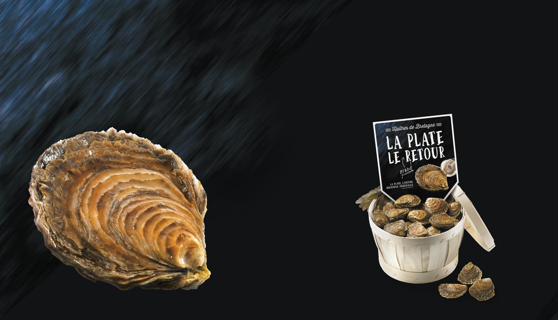 LA PLATE, L'HUÎTRE BRETONNE ORIGINELLE